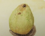 It is the Pear!
